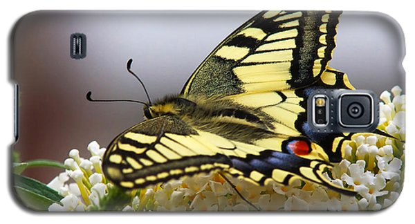 Galaxy S5 Case featuring the photograph Swallowtail Butterfly by Nick  Biemans