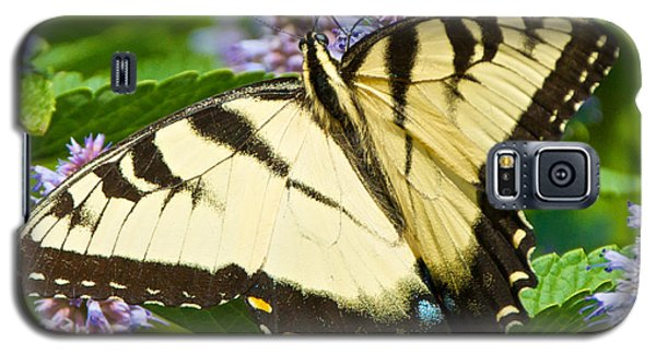 Swallowtail Butterfly On Anise Hyssop Galaxy S5 Case