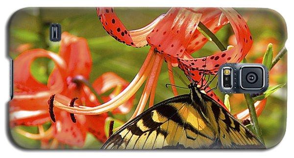 Swallowtail Butterfly Galaxy S5 Case by Susan Crossman Buscho