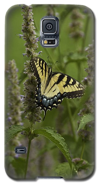 Swallowtail In Flower Field Galaxy S5 Case