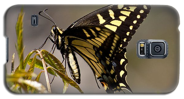 Swallowtail In Profile Galaxy S5 Case