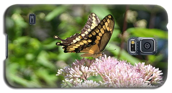 Galaxy S5 Case featuring the photograph Swallowtail by Karen Silvestri