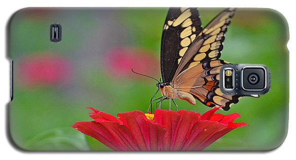 Galaxy S5 Case featuring the photograph Swallowtail On A Zinnia by Rodney Campbell