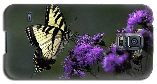 Swallowtail On Purple Galaxy S5 Case