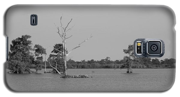 Galaxy S5 Case featuring the photograph Swamp Cypress Trees Black And White by Joseph Baril