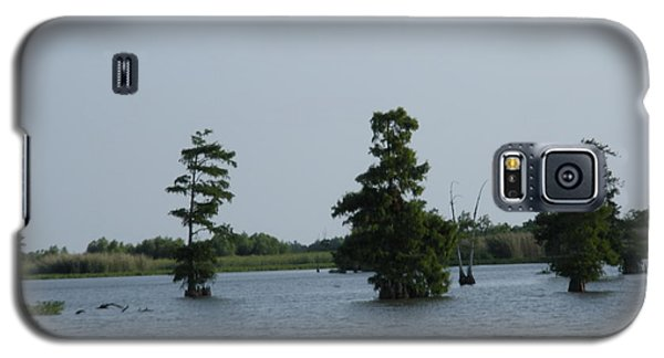 Galaxy S5 Case featuring the photograph Swamp Tall Cypress Trees  by Joseph Baril