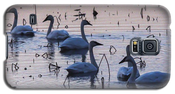 Swan At Dusk Galaxy S5 Case