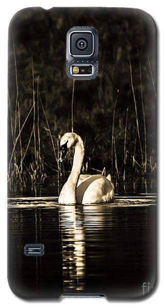 Galaxy S5 Case featuring the photograph Swan B/w by Rose-Maries Pictures