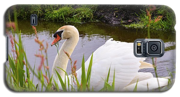 Swan In Water In Autumn Galaxy S5 Case