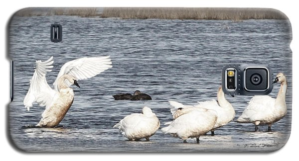 Swan Lake Galaxy S5 Case