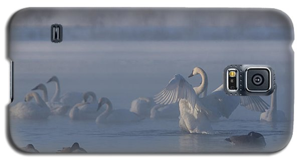 Swan Showing Off Galaxy S5 Case by Patti Deters