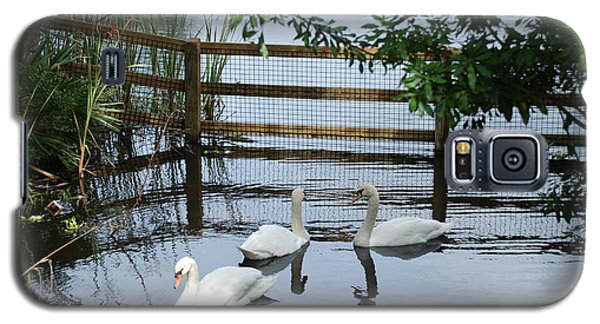 Swans In The Pond Galaxy S5 Case by Beverly Stapleton