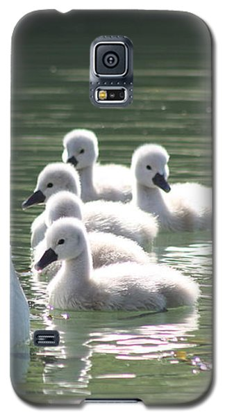 Galaxy S5 Case featuring the photograph Swans  by Rogerio Mariani
