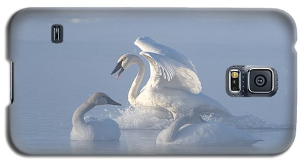 Trumpeter Swans - Three's Company Galaxy S5 Case by Patti Deters
