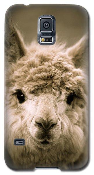 Sweet Alpaca Galaxy S5 Case by Shane Holsclaw