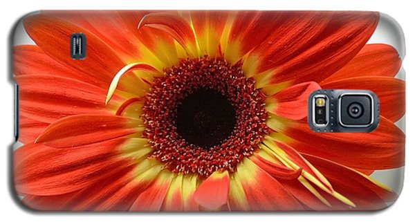 Galaxy S5 Case featuring the photograph Sweet And Simple by Melanie Moraga