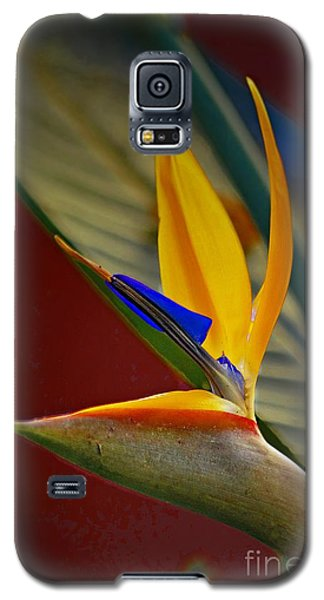 Sweet Bird In Veracruz Galaxy S5 Case