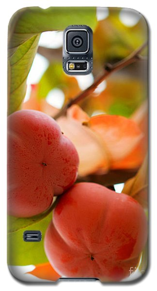 Galaxy S5 Case featuring the photograph Sweet Fruit by Erika Weber