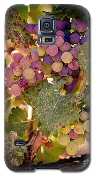 Sweet Grapes Galaxy S5 Case by Ana V Ramirez