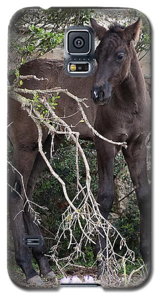 sweet heart - A tender foal wait his beloved mother  Galaxy S5 Case by Pedro Cardona