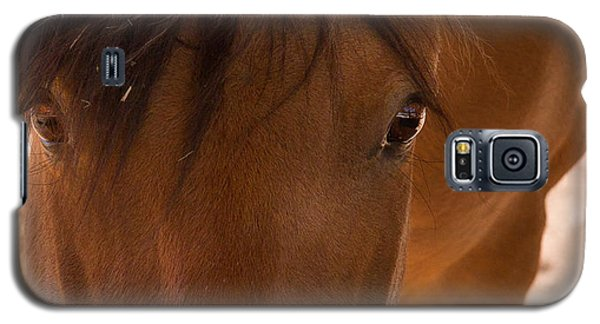 Sweet Horse Face Galaxy S5 Case