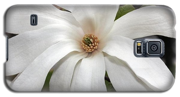 Galaxy S5 Case featuring the photograph Sweet Magnolia by Judy Palkimas
