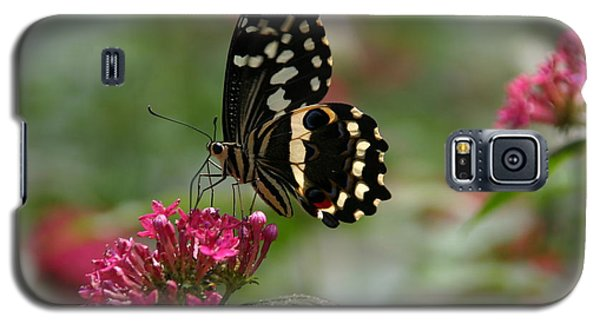 Galaxy S5 Case featuring the photograph Sweet Nectar by Denyse Duhaime