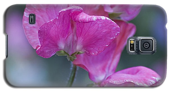 Sweet Pea In Pink Galaxy S5 Case