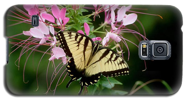 Sweet Swallowtail Galaxy S5 Case by Living Color Photography Lorraine Lynch