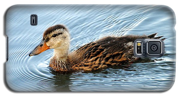 Swimming Mallard Hen Galaxy S5 Case