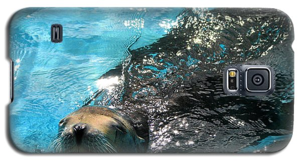 Galaxy S5 Case featuring the photograph Swimming Sea Lion by Kristine Merc