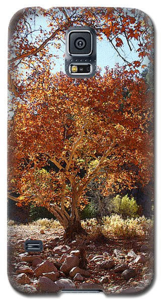 Sycamore Trees Fall Colors Galaxy S5 Case by Tom Janca