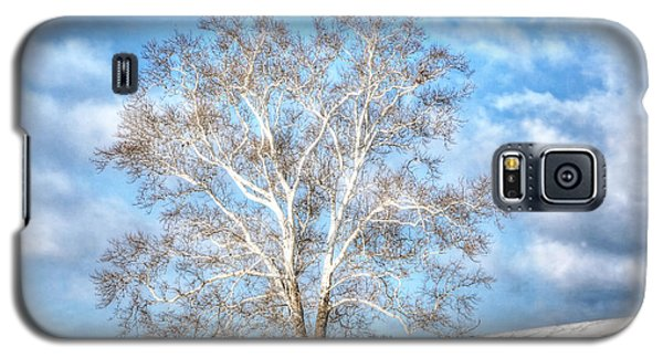 Sycamore Winter Galaxy S5 Case by Jaki Miller