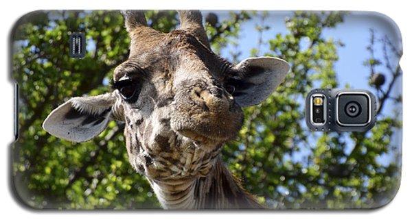 Sympathetic Giraffe Galaxy S5 Case by AnneKarin Glass