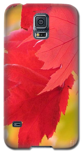 Symphony Of Autumn 22 Galaxy S5 Case by France Laliberte