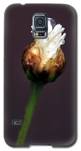 Synergy I Galaxy S5 Case by Marion Cullen