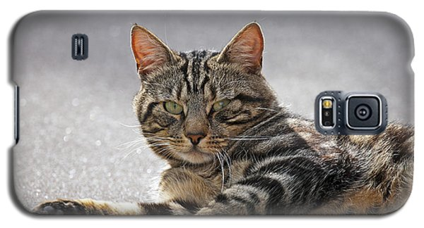Galaxy S5 Case featuring the photograph Tabby Cat by Paul Scoullar