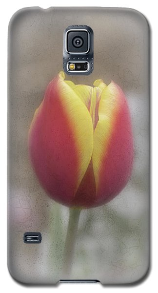 Tabitha Galaxy S5 Case by Elaine Teague