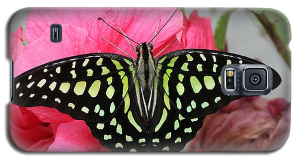 Galaxy S5 Case featuring the photograph Tailed Jay Butterfly #6 by Judy Whitton