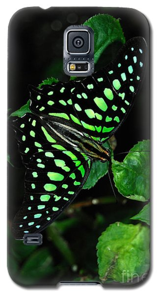 Galaxy S5 Case featuring the photograph Tailed Jay Butterfly by Eva Kaufman