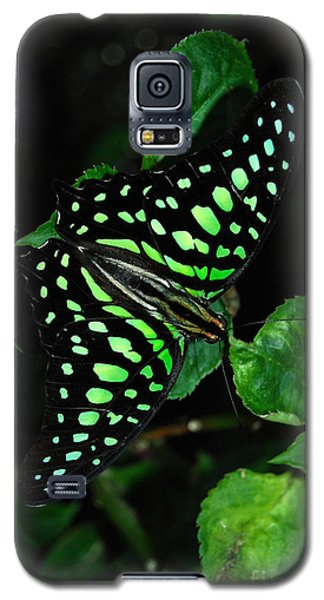 Tailed Jay Butterfly Galaxy S5 Case