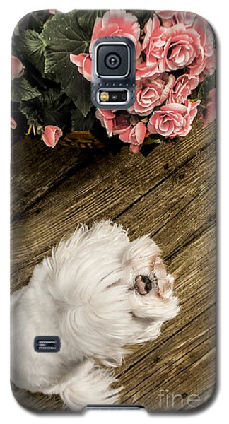 Havanese Puppy Galaxy S5 Case