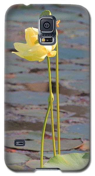 Tall And Golden Galaxy S5 Case by Rosalie Scanlon