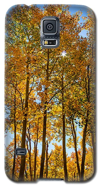 Tall Aspen With Sunstar Galaxy S5 Case