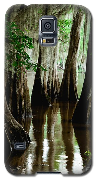 Tall Cypress Galaxy S5 Case by Iris Greenwell
