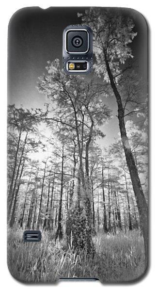 Tall Cypress Trees Galaxy S5 Case