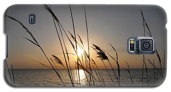 Tall Grass Sunset Galaxy S5 Case