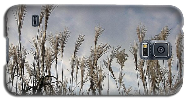 Tall Grasses And Blue Skies Galaxy S5 Case by Dora Sofia Caputo Photographic Art and Design