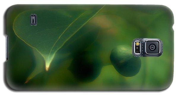 Tallow Tree Galaxy S5 Case by Travis Burgess