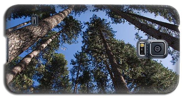 Talls Trees Yosemite National Park Galaxy S5 Case
